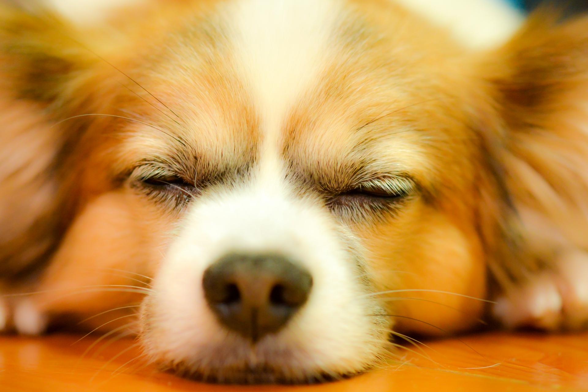 睡眠時間の理想は何時間?思考錯誤の末に出たベストタイムはコレ!
